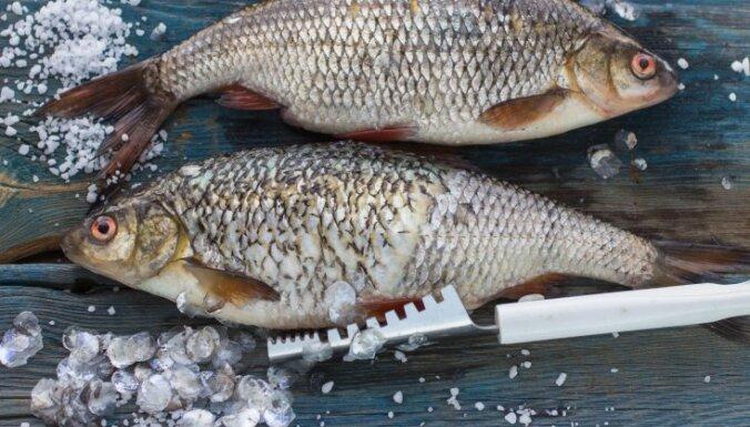 Kā zivis notīrīt ātri un vienkārši? Zivju ceturtdienas gardās receptes
