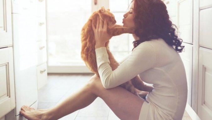 Saimnieka buča kaķim - vai vēlama un ko der zināt