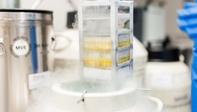 Стволовые клетки – подарок современной науки для тех, кто думает про завтра