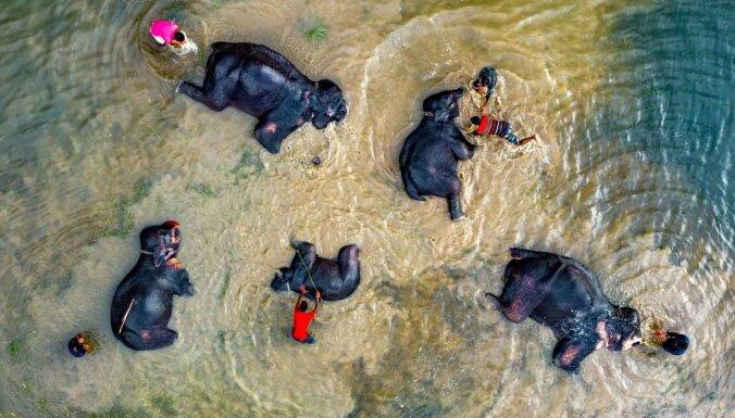 Dienas ceļojumu foto: ziloņu pelde Bangladešā