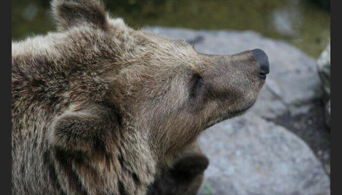 В цирке Бишкека медведь задрал двух человек