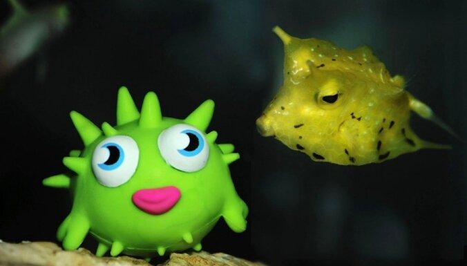 Neparasta kaisle: Zivs iemīl plastmasas lellīti