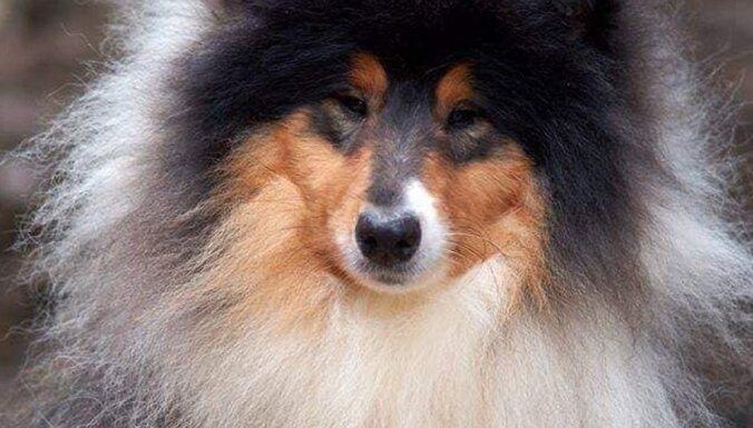 В Тукумсе ведутся поиски пропавшей собаки: возможно, ее сбил автомобиль