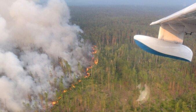 #CпаситеСибирь: РБК объясняет, что не так с акцией привлечения внимания к лесным пожарам в Сибири