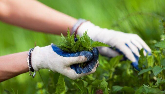 Хитрости огородника: определение типа почвы по сорнякам и диким растениям