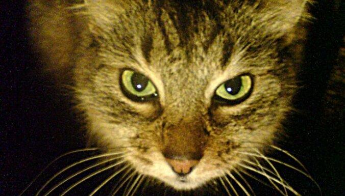 Сердобольную старушку покусали злые коты