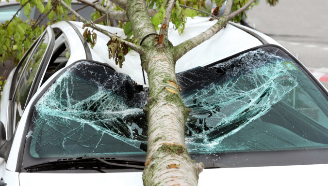 В Риге поваленные из-за сильного ветра деревья придавили шесть машин и человека