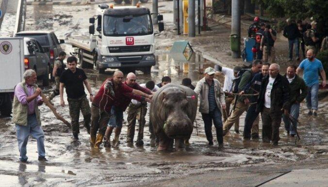Патриарх Грузии: наводнение в тбилисском зоопарке — это грехи коммунистов