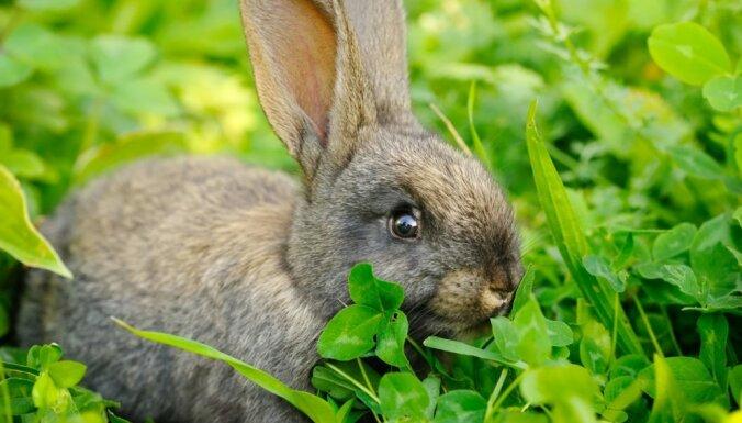 """В пожаре в """"Королевстве кроликов"""" сгорело около 200 кроликов и 23 свиньи"""