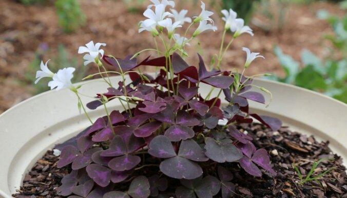Цветы в корзине: 20 видов подвесных растений для квартиры, балкона и дачи