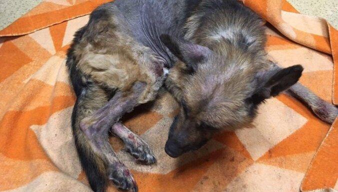 Хозяина доведенной до истощения и смерти собаки привлекут к уголовной ответственности