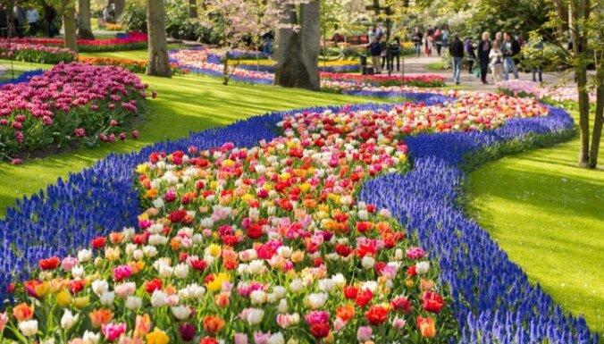 Краски весны: Королевский парк цветов Кекенхоф (ФОТО)