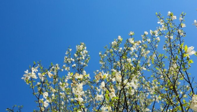 No pirmdienas līdz trešdienai gaidāms saulains, vējains un ļoti silts laiks