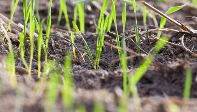 Zāliena audzēšana pavasarī – kā sagatavot augsni un iesēt sēklas