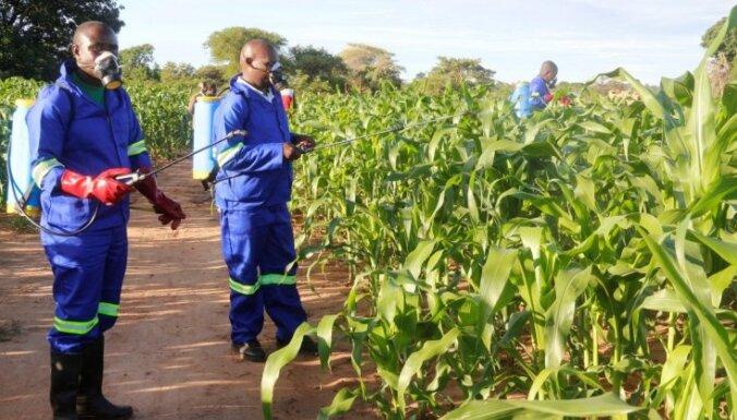 Negants kāpurs ēd afrikāņu kukurūzu; Zambija cīņā iesaista militāro aviāciju