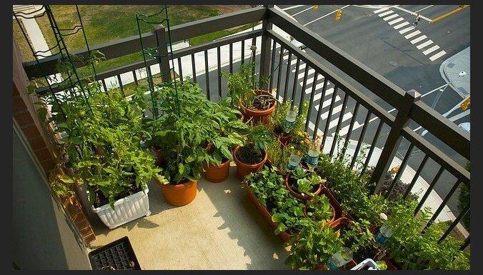 Par prieku gardēžiem: balkona mazdārziņš