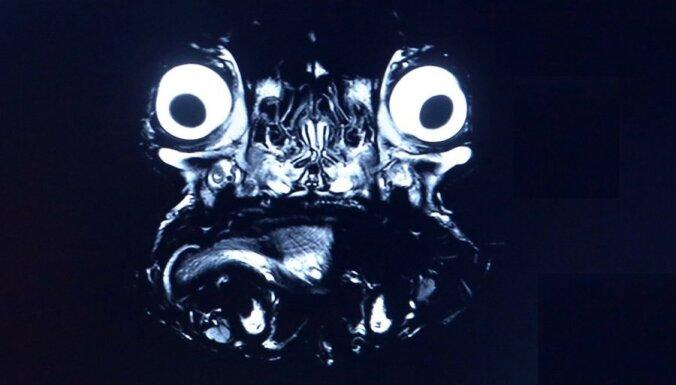 Foto: Kā buldoga seja izskatās tomogrāfā