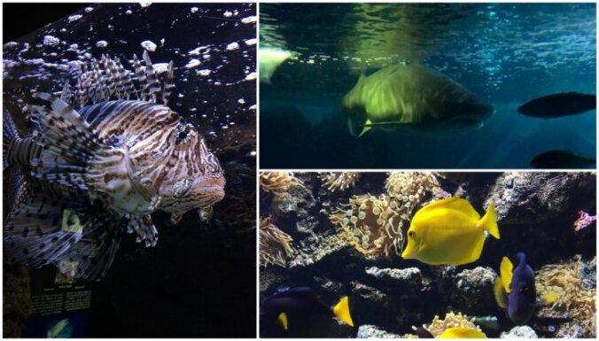 Haizivis, medūzas un krāsainas zivtiņas: zemūdens pasaules iepazīšana Spānijas ziemeļos