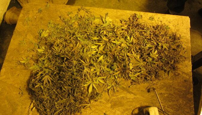 Во время обыска полиция изъяла 130 граммов марихуаны