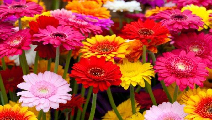 5 неприхотливых растений для идеального палисадника