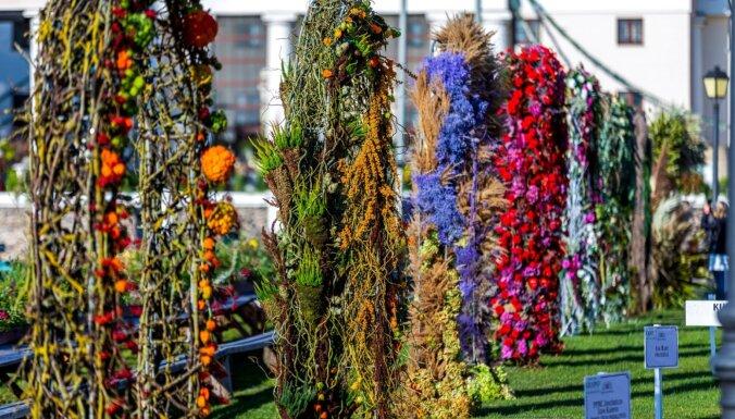 Kāzu noskaņas Pakrojas muižā – izveidotas 15 krāšņas ziedu arkas