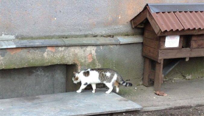 'Delfi' reportāža: Konservatīvie peļu junkuri kaķu mājiņu vietā lieto pagrabus