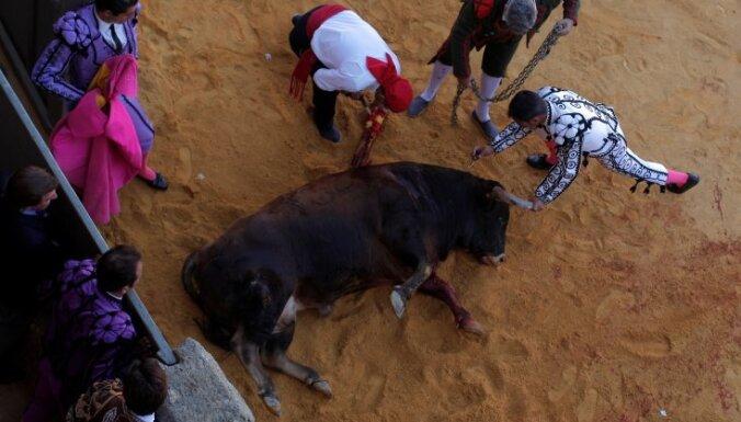 ВИДЕО: На фестивале матадоров быки убили друг друга