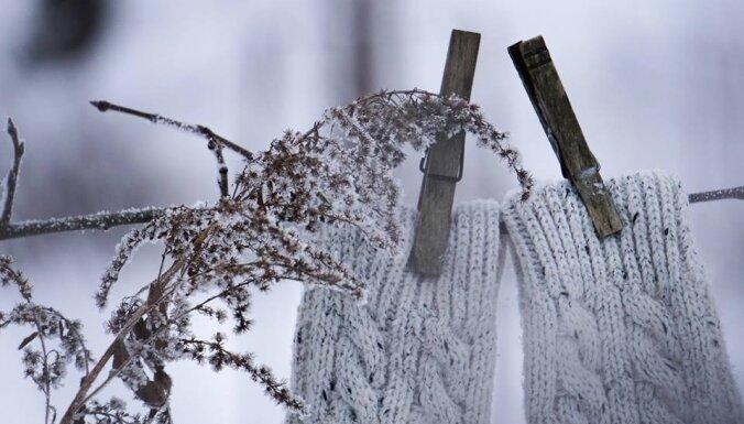 Apsniguši zari, kupenās pazuduši rudens ziedi un dzenis kokā – ziemīgas ainiņas Skrīveros