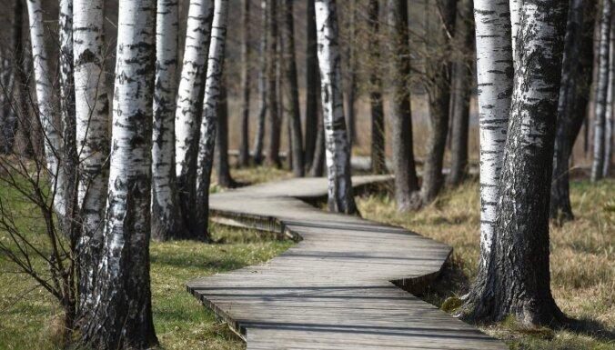 ФОТО: Природная тропа озера Лиелэзерс, с которой открываются живописные виды
