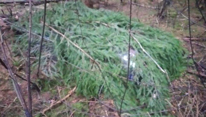 ФОТО. В приграничном лесу обнаружены схроны с контрабандой
