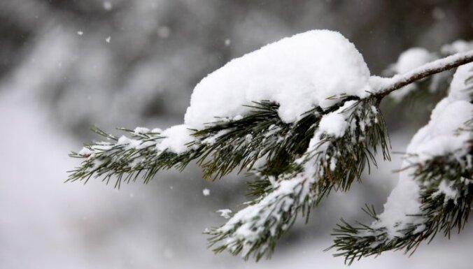 ФОТО, ВИДЕО: В Эстонии настоящий снегопад в середине мая!