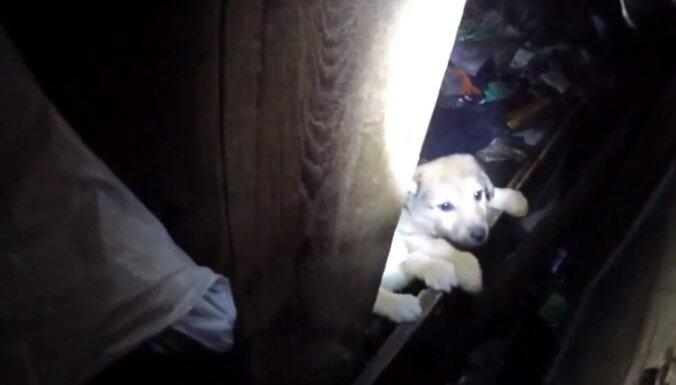 Kādā pamestā šķūnī Teikā atrasti četri kucēni un viņu mamma