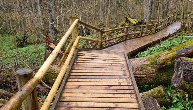 Apmeklētājiem pieejama atjaunotā Šlīteres dabas taka