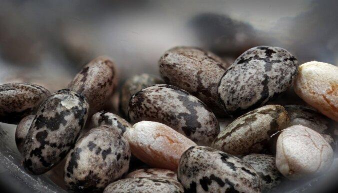 """Новый день — новая пища. Как """"еда будущего"""" проникает на латвийские прилавки"""