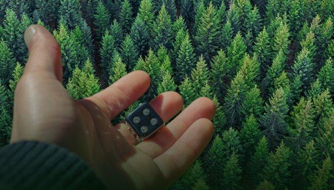 Лес – это определённо не лотерея