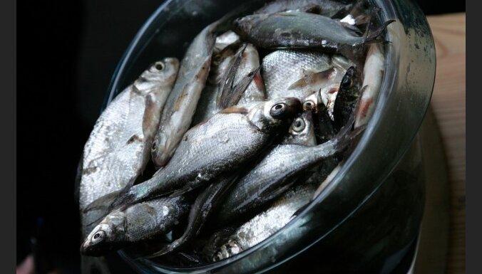 Laikraksts: desmit gadu laikā zvejas flote būs samazināta par 70%