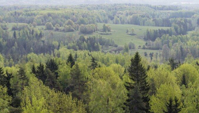 Aicina paust viedokli par jauno ES Meža stratēģijas dokumentu