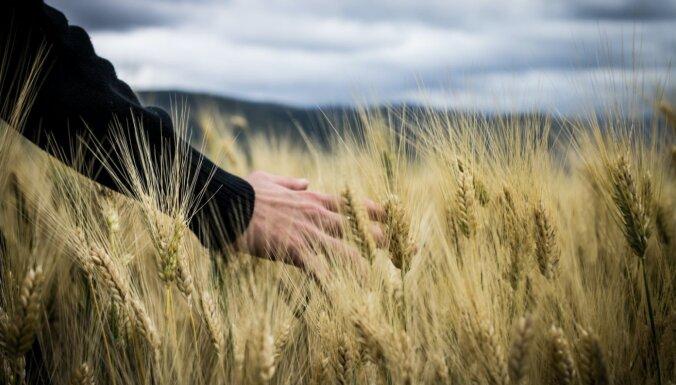 Bioloģisks – tātad bez pesticīdiem: izplatītākie mīti par kultūraugu aizsardzību