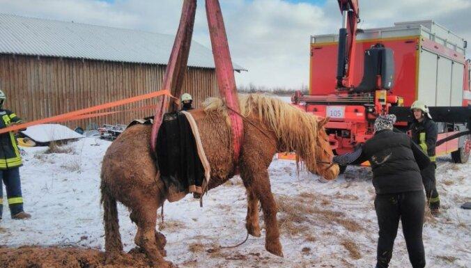ФОТО: Под Сигулдой пожарным пришлось вытаскивать увязшего в грязи коня