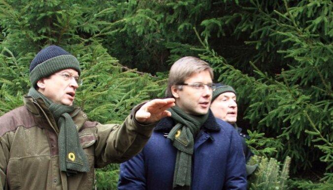 Для украшения Риги выбраны две 20-метровые ели