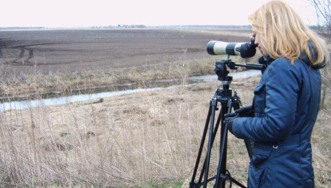 Птичьи базары: Лучшие места в Латвии для наблюдения за птицами
