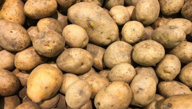 Судебный исполнитель распродает имущество крупного латвийского овощеводческого хозяйства