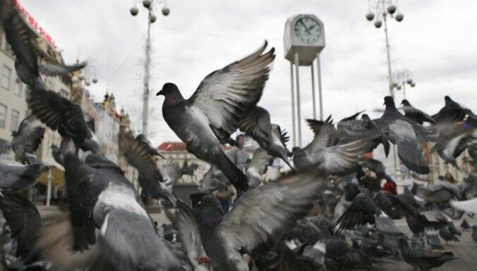 Пернатые в городе. Куда исчезли голуби и как заставить чаек не кричать