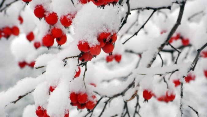 Apsnigušais dārzs ziemas sezonā – kā to kopt?