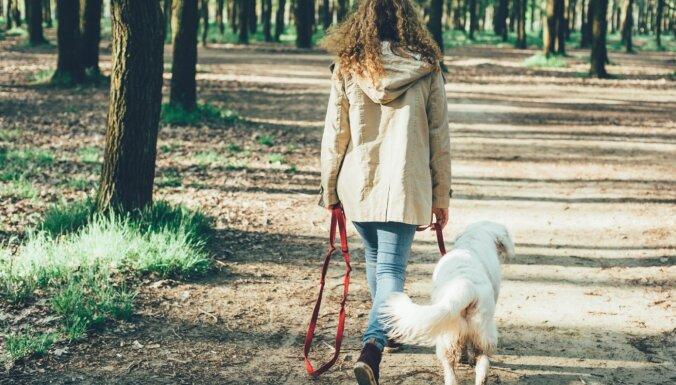 В рижских парках появились столбики для собак, призванные спасти деревья от мочи