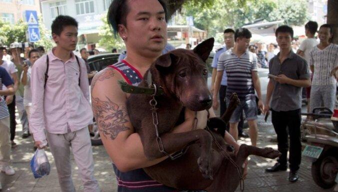 Foto: Ķīnieši vasaras saulgriežos palutina sevi ar suņa gaļu