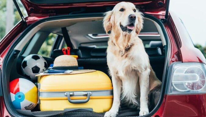 Kā automašīnā droši un pareizi pārvadāt mājdzīvniekus?