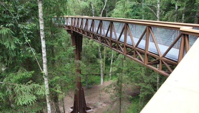 Rīgas meži: Латвийская прогулочная тропа между крон деревьев будет выше и длиннее литовской