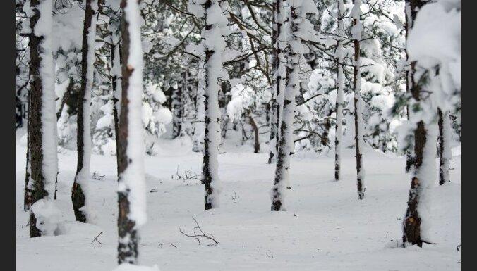 Gadumiju sola sniegotu un aukstu