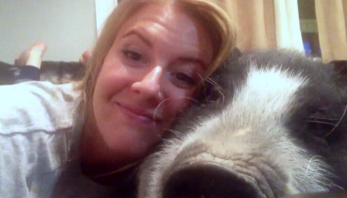 Video: Cūciņa, kura nemaz negrib mīļoties